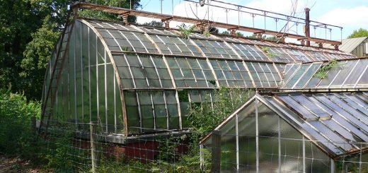 Photographie 3. Grande serre du jardin d'essai tropical.