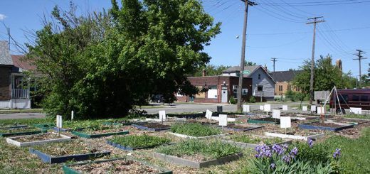 Figure 3. Jardin communautaire du Georgia Street Community Collective (East Side, Detroit, MI). Source: F. Paddeu, 2013.